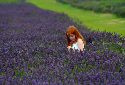 Lavender fieldIMG_2668_1024