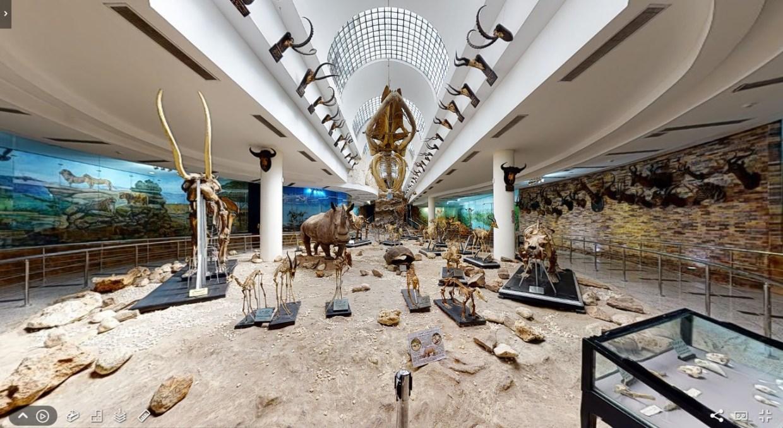 Hình ảnh Giza Zoo thu được từ máy ảnh 3D Matterport Pro2