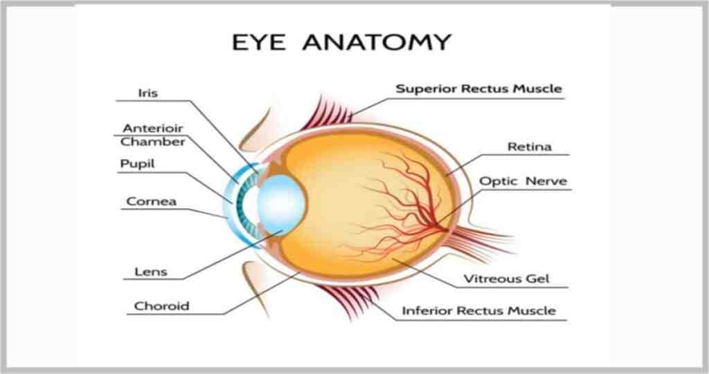 photic retinopathy