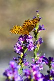 Bird Creek Butterfly
