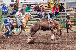 Ketchum Kalf Rodeo 7346