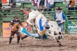 Ketchum Kalf Rodeo 7915