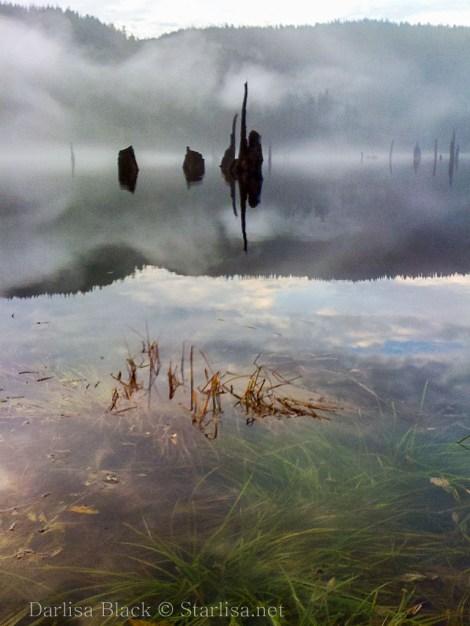 Fog_1429
