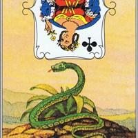 Lenormandkarten 7 von 36~ Die Schlange