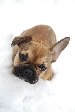 Einer der Hunde von Tabea genießt den Schnee. (Foto: Tabea Berger)