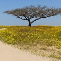 Eine grüne Suchmaschine: Meine Erfahrungen mit Ecosia