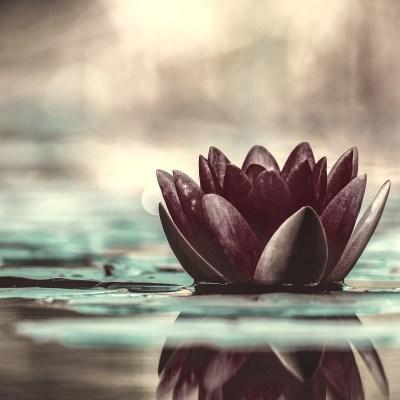 Spread Goodness and Grow Spiritually with Black Lotus