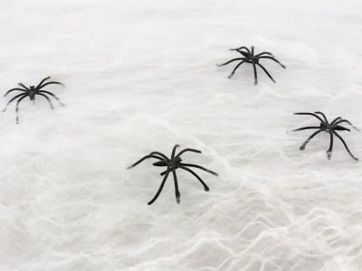 Ämblikuvõrk 80g/8 ämblikut