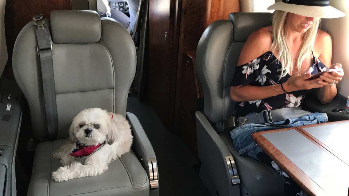 Flying with pets Private jet hire