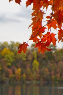 Fall comes to Syracuse in a blaze of glory!