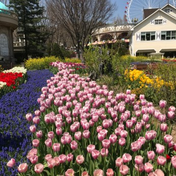 we were lucky to be in time for their tulips festival!