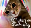 Whiskers on Wednesday