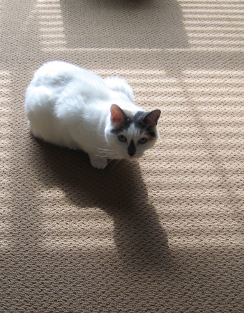 Love the shadow!