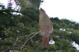 CardinalIMG_8538