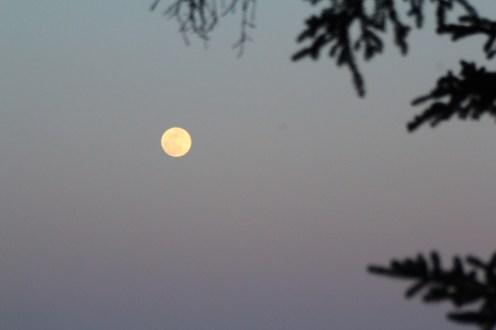 Full spring moon