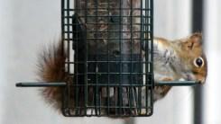 Squirrel-proof feeder