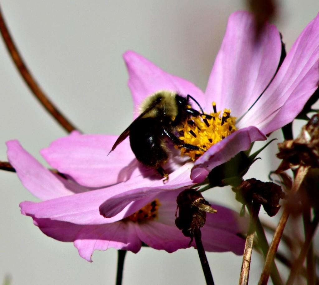 Bee14