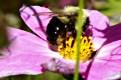 Bee17