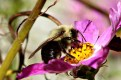 Bee18