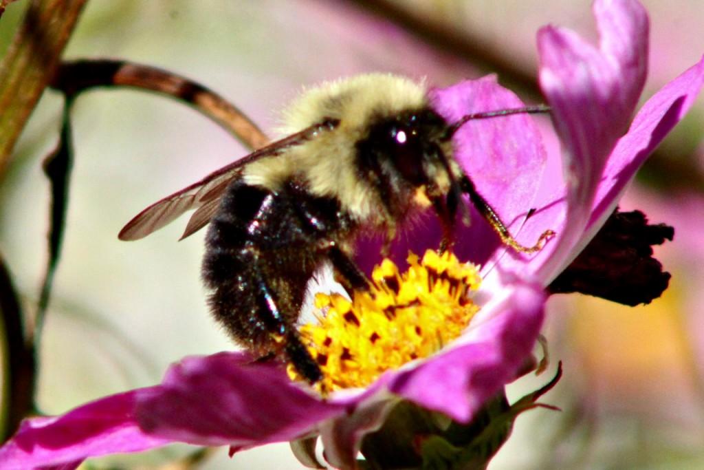 Bee19
