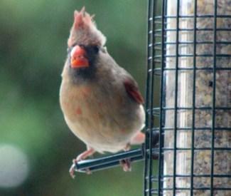 Cardinal22