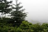 Fog13