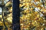 Fall20