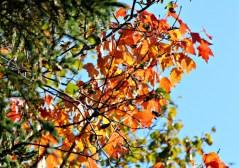Fall36