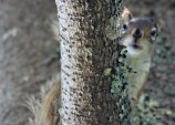 IMG_4790Squirrel