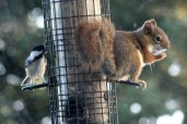 IMG_9323Squirrel
