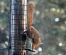 IMG_9326Squirrel