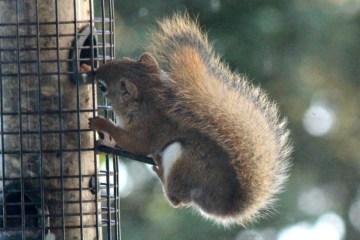 IMG_9327Squirrel
