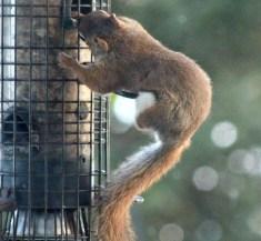 IMG_9329Squirrel