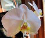 IMG_0041Orchid