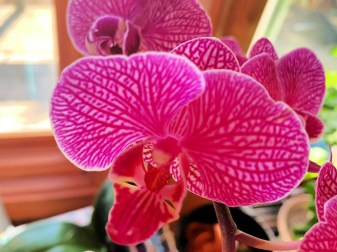 IMG_0043Orchid