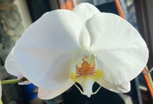 IMG_0046Orchid