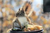 IMG_3343Squirrel