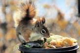 IMG_3345Squirrel