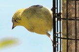 IMG_4474Finches