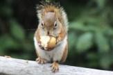 IMG_4186Squirrel