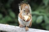 IMG_4187Squirrel