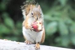 IMG_4195Squirrel