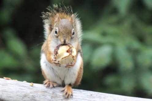 IMG_4196Squirrel