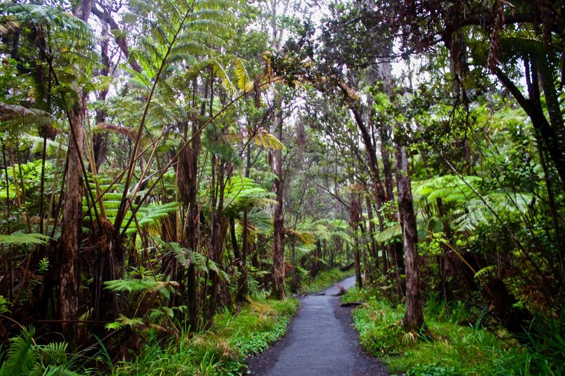 Volcanoes National Park Hawaii Trees