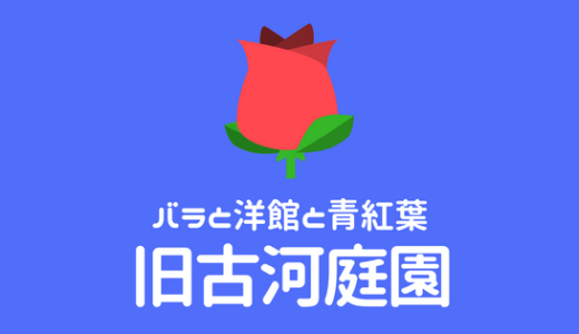 【旧古河庭園】バラと洋館と青紅葉がきれいなおすすめ撮影スポット