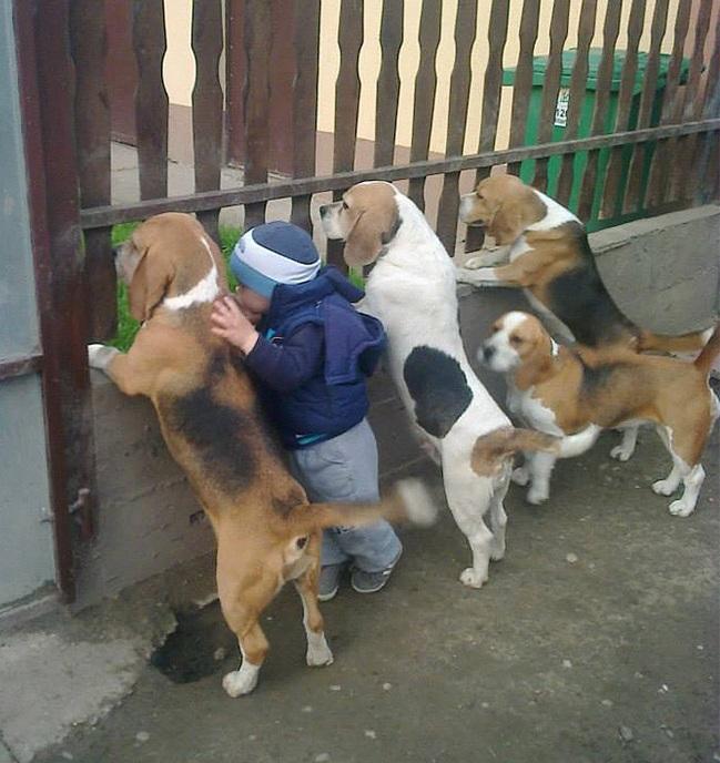 boyanddogs