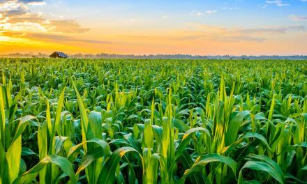 10 business mistakes made by most Zimbabwean farmers