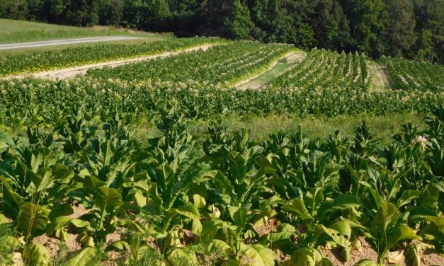 Tobacco and cotton farmers to get only 20% in foreign currency