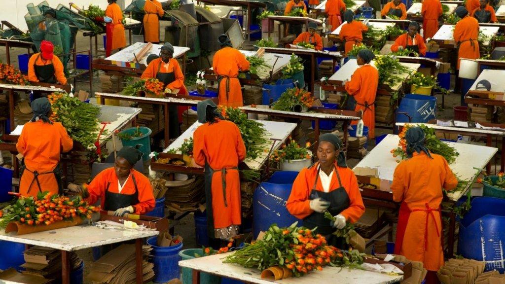 Kenya top African flower exporter, Disabled barbie doll and Innovation.