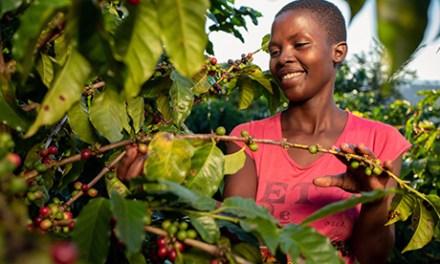 Nespresso Looking To Zimbabwean Coffee